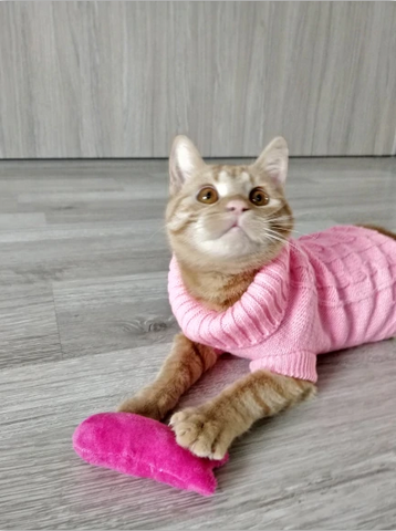 We offer Warm Knitted Sweater for Puppy and Kitten at Insta Fashionista Store