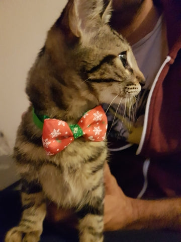 We offer Christmas Holiday Bow Tie Collar for Cat Dog at Insta Fashionista Store
