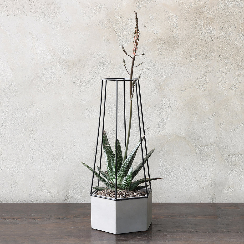 Indio Cement Planter Large