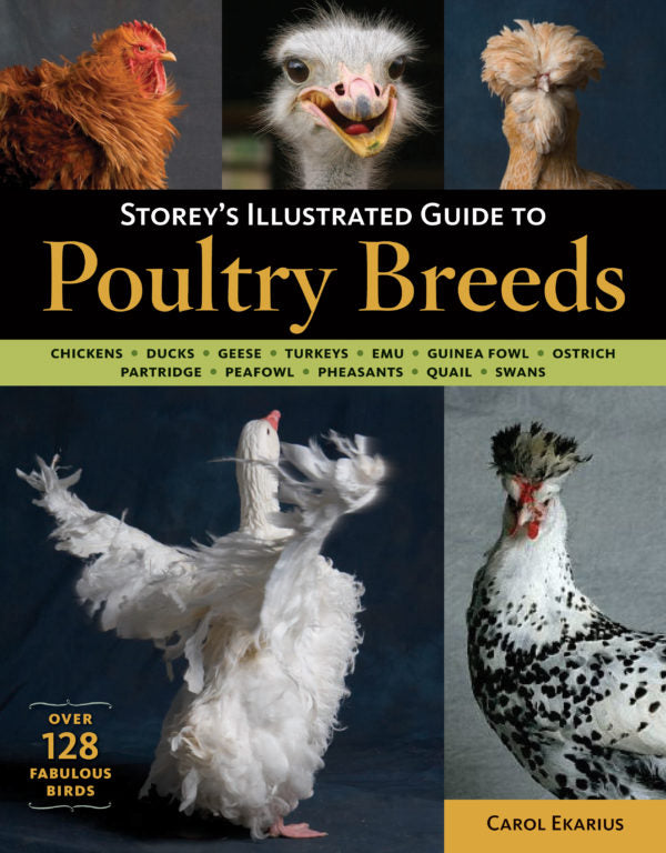 Storeys Illustrated Guide to Poultry Breeds Book