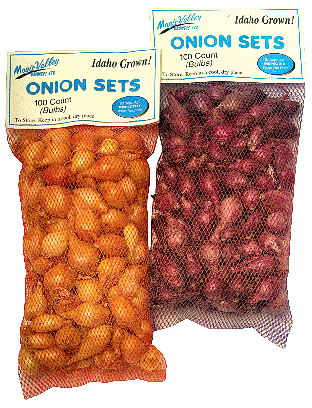 Yellow Onion Sets