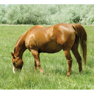 Clearwater Seed Horse Pasture Grass No Clover 25-lb