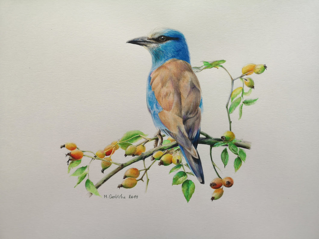 Marta Gotlība EUROPEAN ROLLER AND ROSEHIPS
