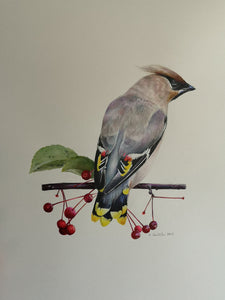 Marta WAXWING AND BERRIES