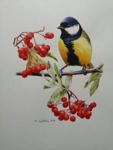 Marta Gotlība GREAT TIT AND MOUNTAIN ASH