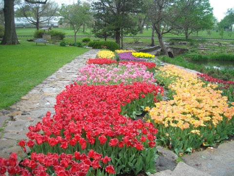 multicolored rose garden