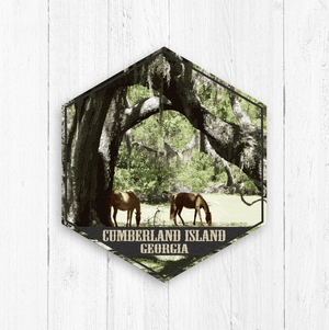 Cumberland Island Georgia Hexagon Illustration Print