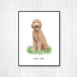 Golden Doodle Watercolor Illustration