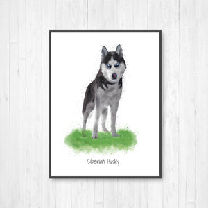 Siberian Husky Watercolor Illustration Print
