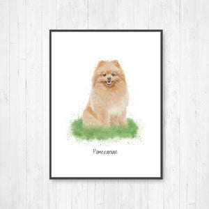 Pomeranian Watercolor Illustration