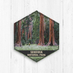 Sequoia National Park Hexagon Canvas