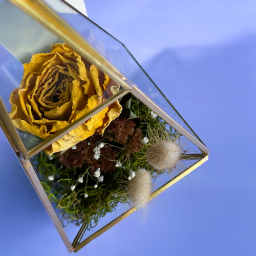 Yellow Rose Prism Terrarium