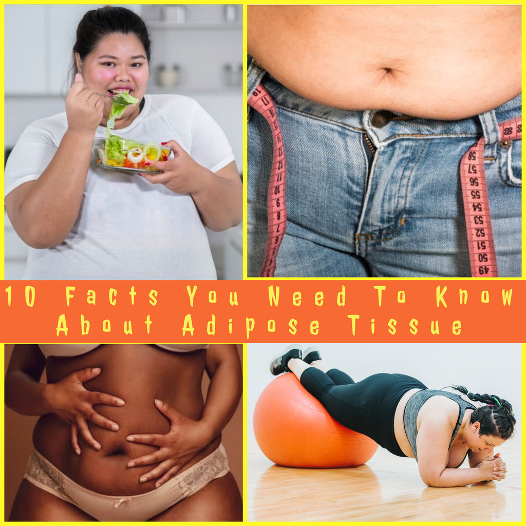 10 Facts You Need To Know About Adipose Tissue <p>By Candace Smith