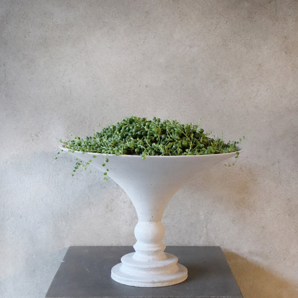 Plant in a Pedestal Flute Inspired Concrete Container