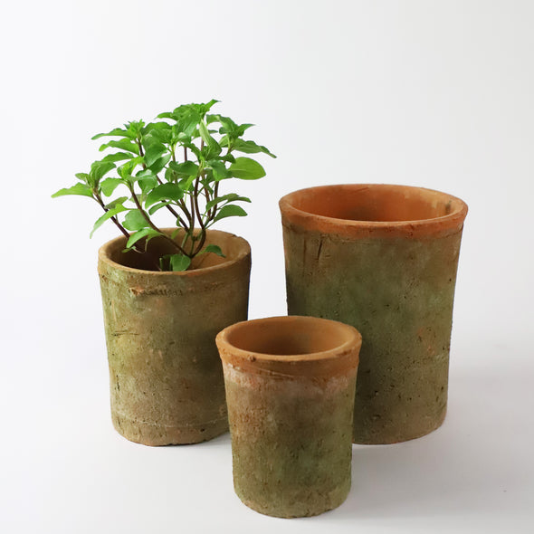 Tall Terracotta Pot with Moss