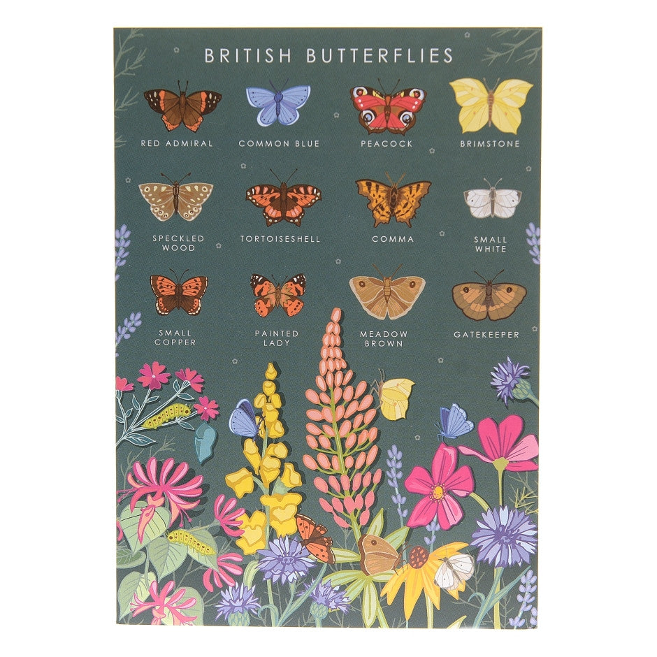 British Butterflies Poster - Illustration Print