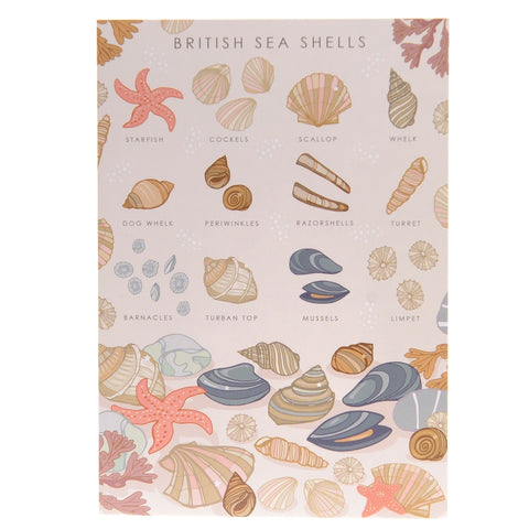 British Sea Shells Poster – illustration print