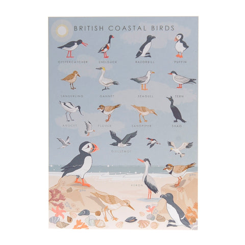 British coastal birds card