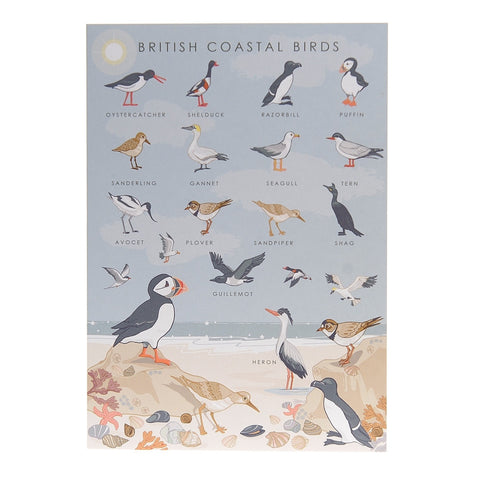 British Coastal Birds Poster – Illustration Print