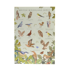 British Woodland Birds Poster - Illustration Print