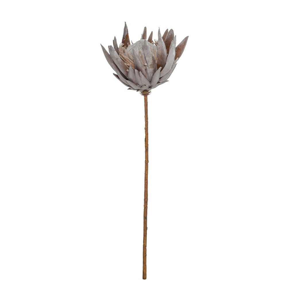 King Protea Stem - Dusty Brown