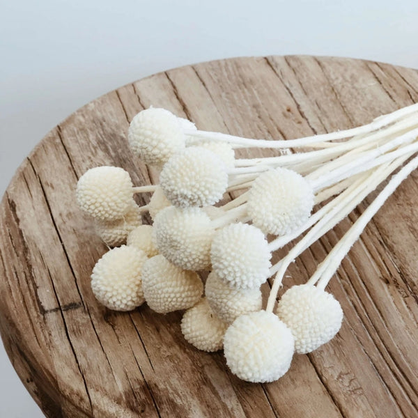 Billy Buttons - White