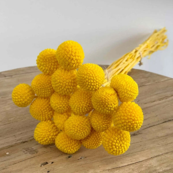 Billy Buttons - Yellow