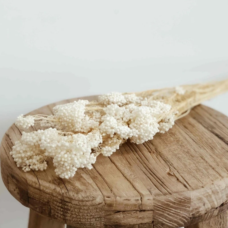 Rice Flower - White