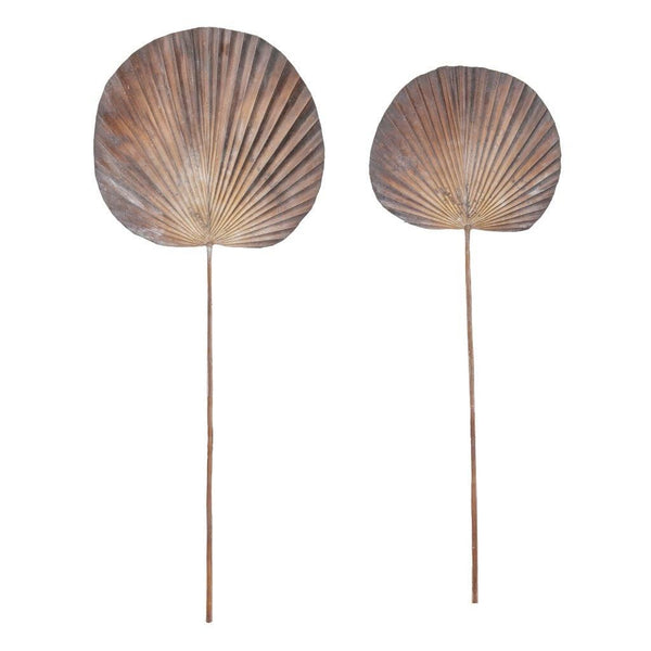 Deco Fan Palm - Dark Brown Small