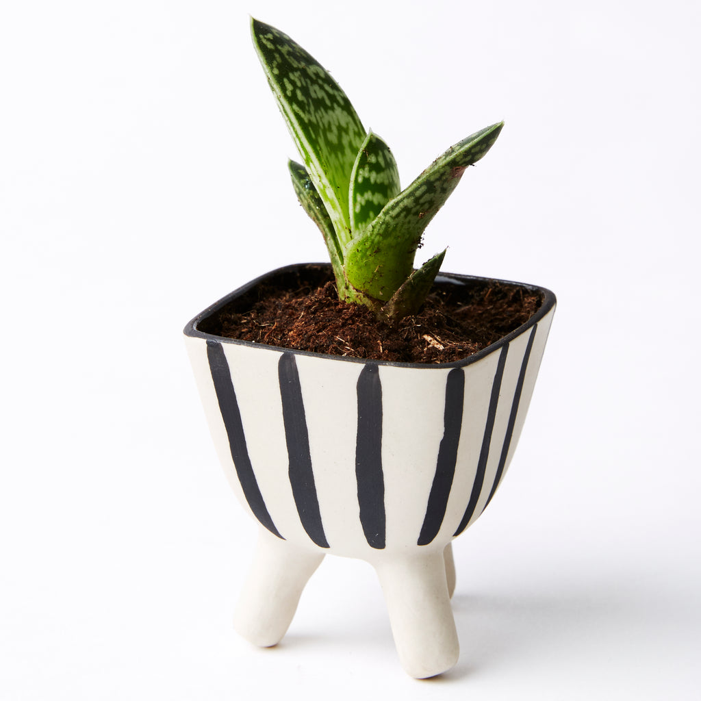Stripes Footed Mini Planter