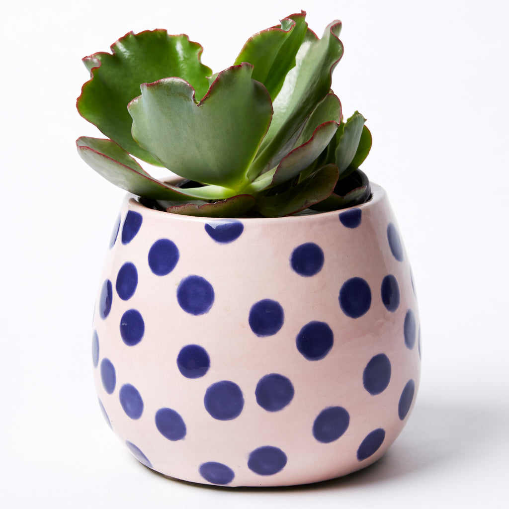 Blue Dot Planter