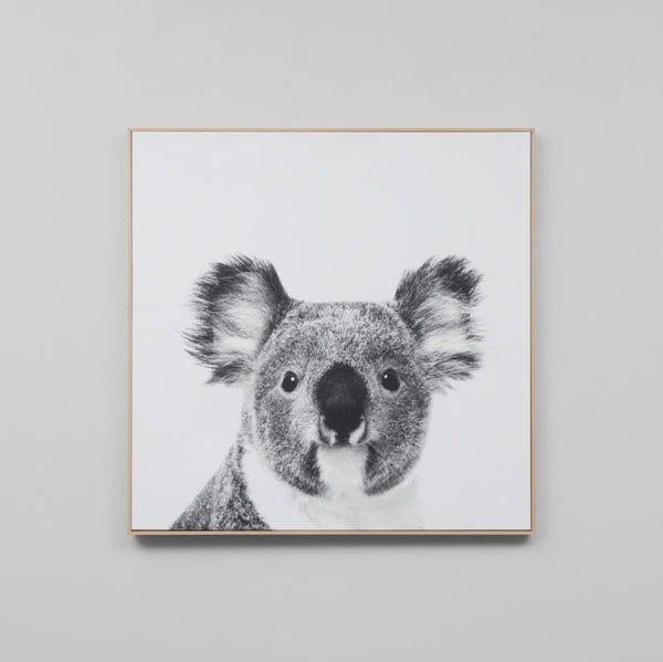 Koala Framed Canvas