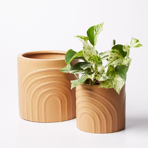 Rainbow Pot - Elm Small