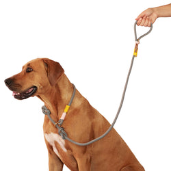 Around-The-Block Leashes