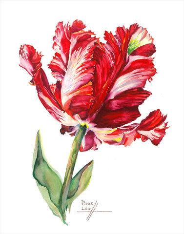 Red Estella Tulip - Carolyne Roehm // Page Lee Hufty