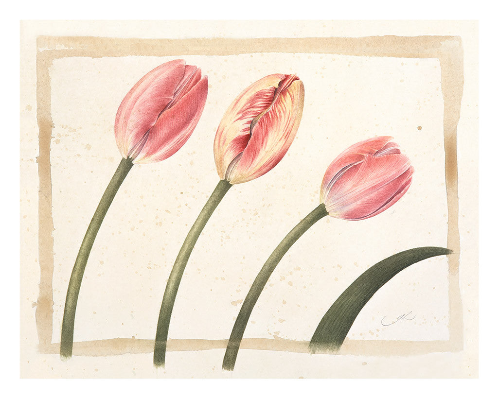 Three Tulips // Gertrude Hamilton