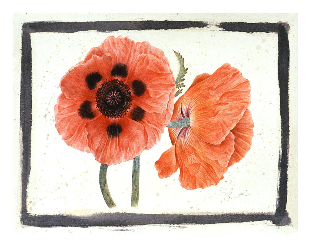 Red Poppies // Gertrude Hamilton