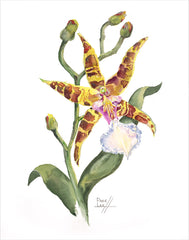 Odontoglossum Orchid // Page Lee Hufty