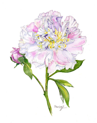 Top Brass Peony // Page Lee Hufty