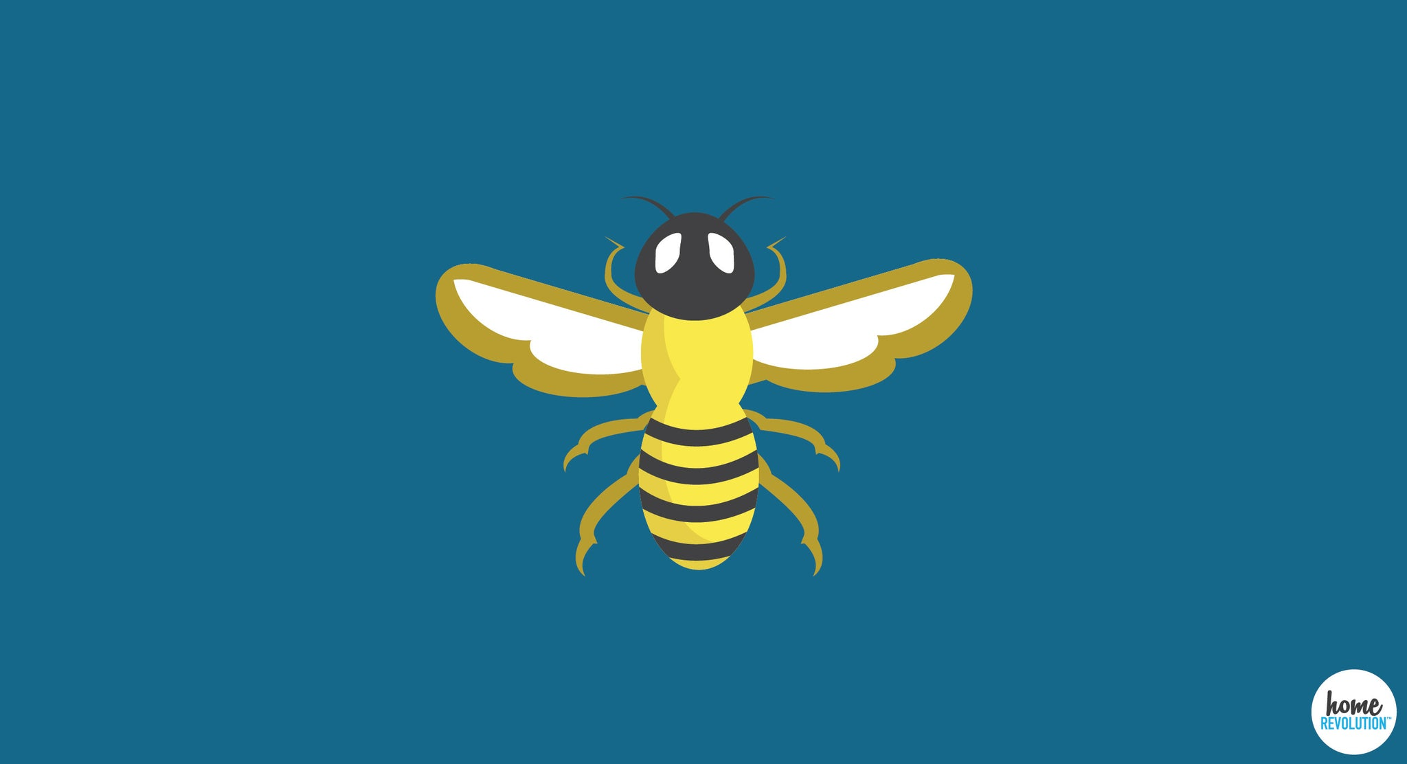 6 Natural Ways To Get Rid of Insects In Your Home - Home Revolution
