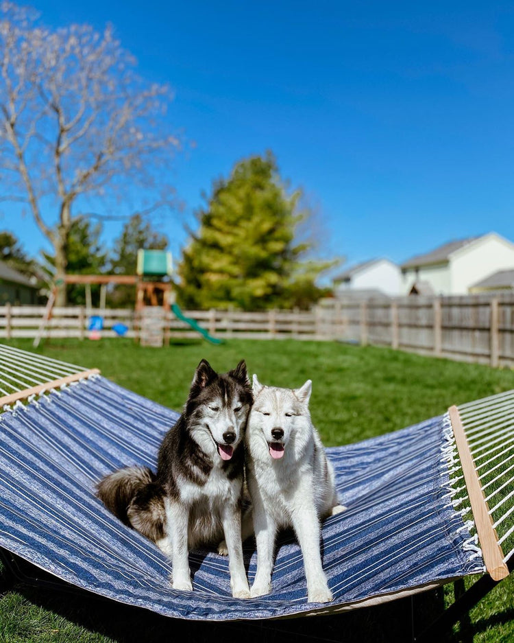two lovely dogs on a Zupapa hammock
