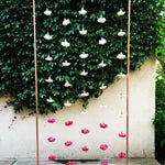 Carnation Curtain Backdrop