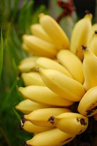 bananas, potassium, health benefits