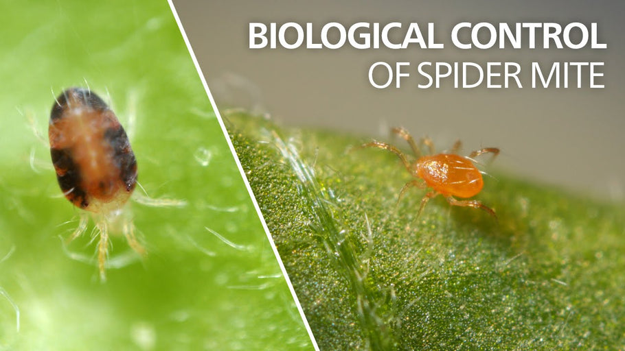 Benenefical Insects Biological Control | Predator Mites Bio-Systems