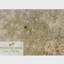 Load and play video in Gallery viewer, Wireless Digital Microscope | For Beneficial Insects