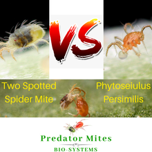 Load image into Gallery viewer, spider mite control