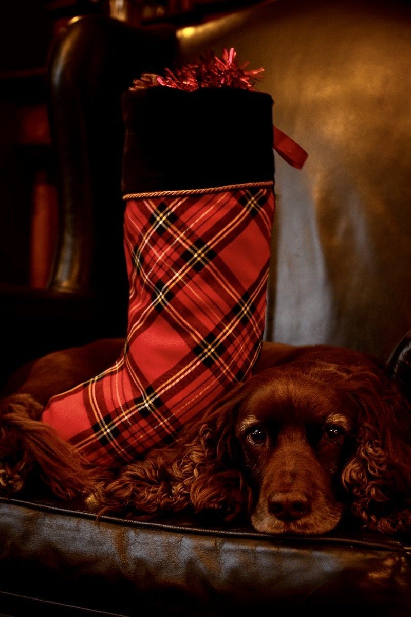 Luxury Christmas Stocking (Stewart Royal Tartan)