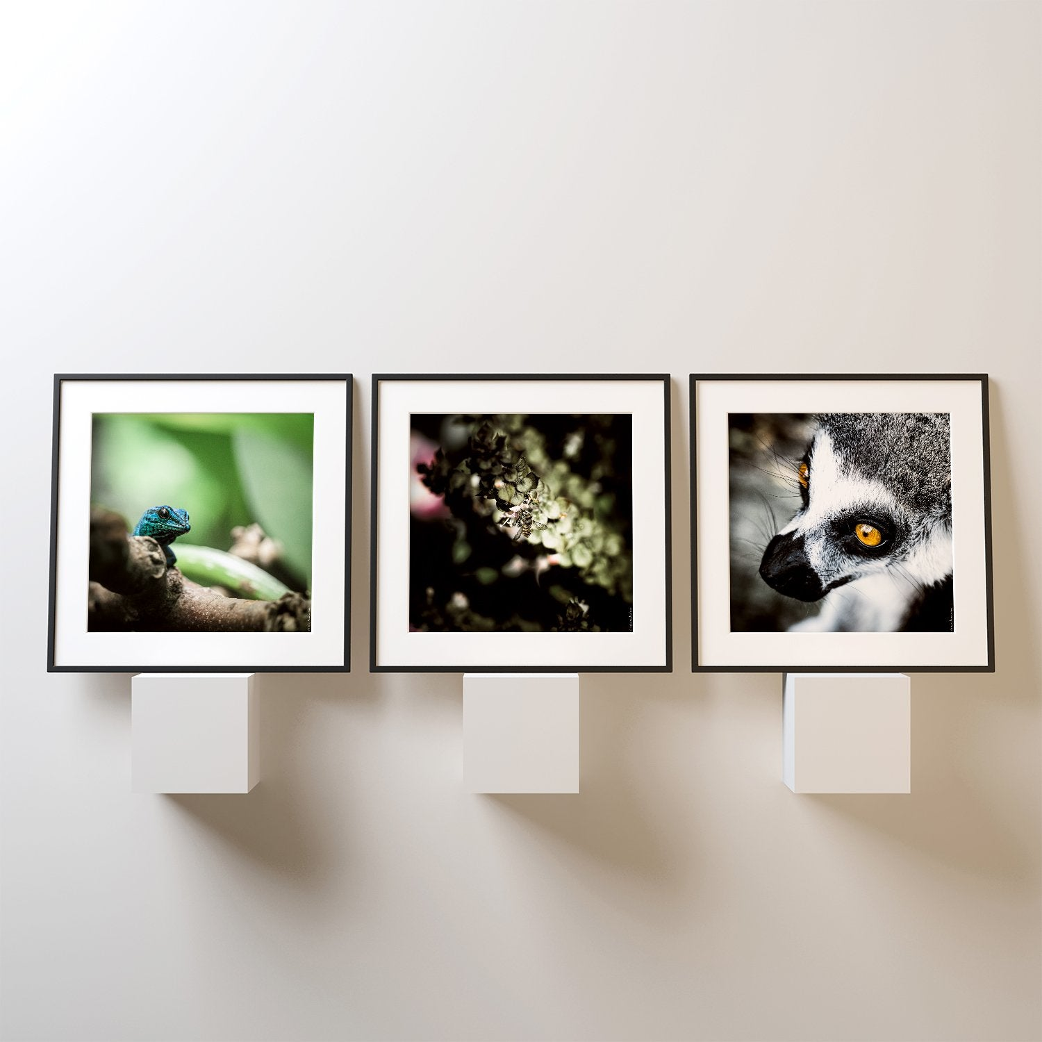 Three animals in square photo prints on the wall
