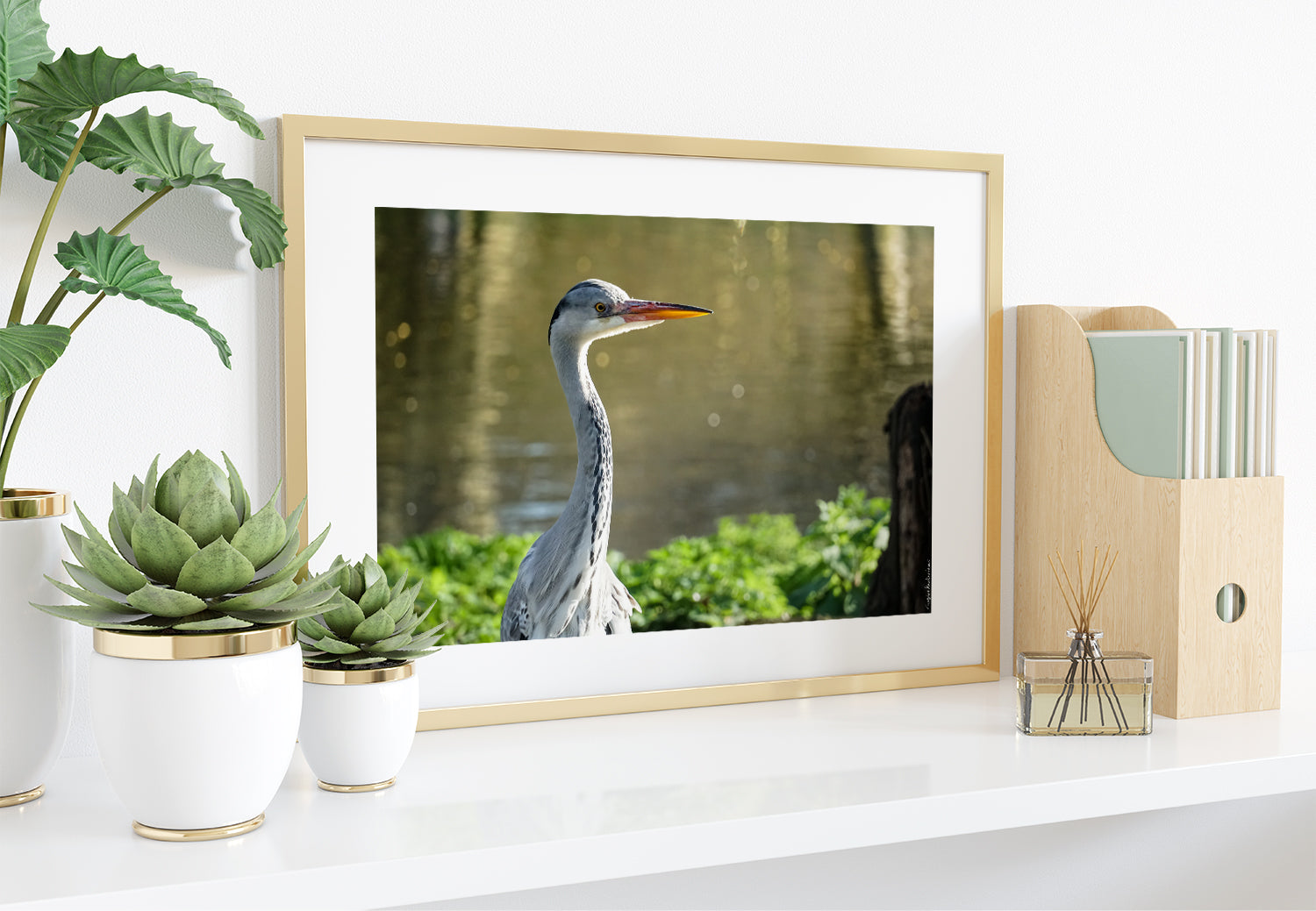 Grey Heron, Photo print