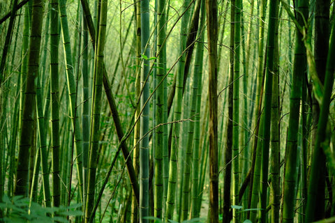 Bamboo fabric is soft and sweat-wicking